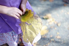 Lily collecting leaves II