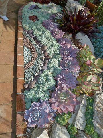 succulent mozaic